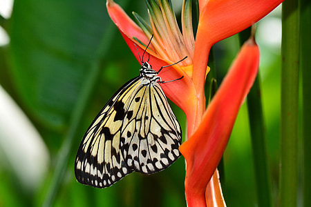 white and black butterfly on red flower