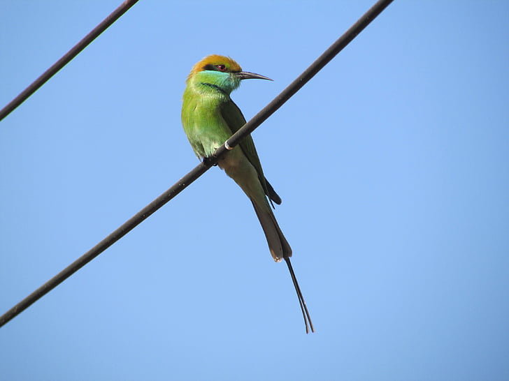 close-up photography of green bee-eater perched on wire