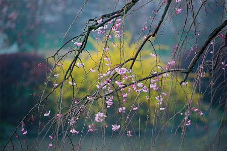 pink cherry blossom tree at daytime