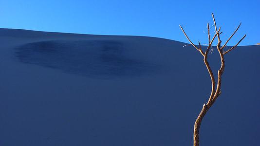 wood branch on desert