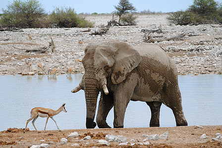 elephant and reindeer on field during daytime