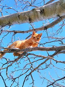 orange tabby cat on tree branch under blue skies during daytime