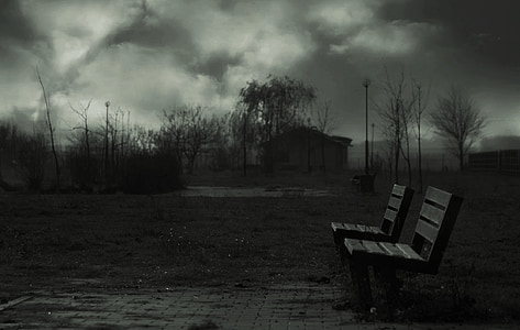 grayscale photo of two benches near trees