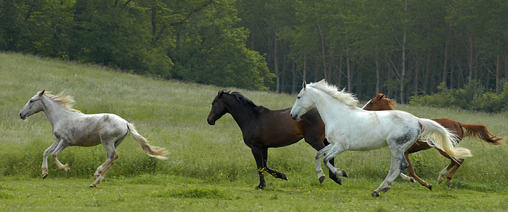 four running horses on green field