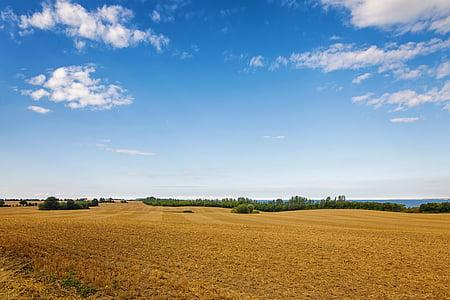 photo of brown grass fields