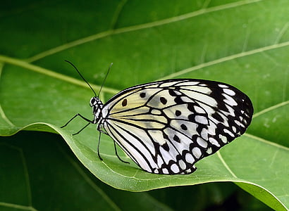 closeup photo of paper kite butterfly on green leaf
