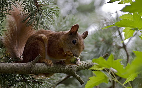 brown squirrel on top green leaf tree