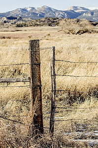 brown wooden pole on grass field