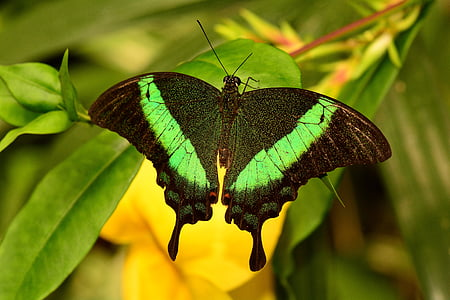 black and green butterfly on green leaves