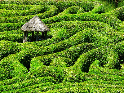white gazebo middle of plant labyrinth