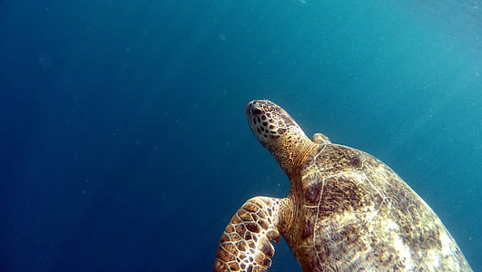 photo of turtle on sea