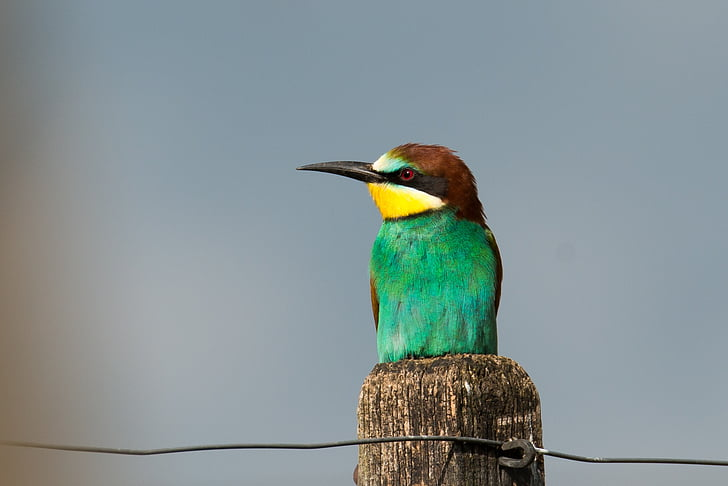 green and brown long-beaked bird on branch