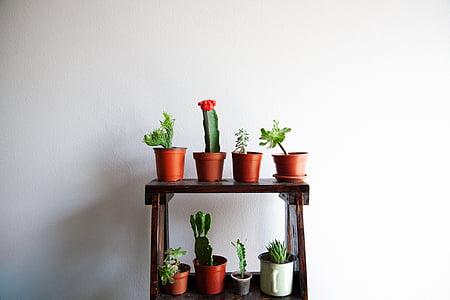 cacti on pot on 2-layered rack