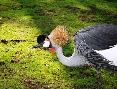 selective focus photography of red-crowned crane