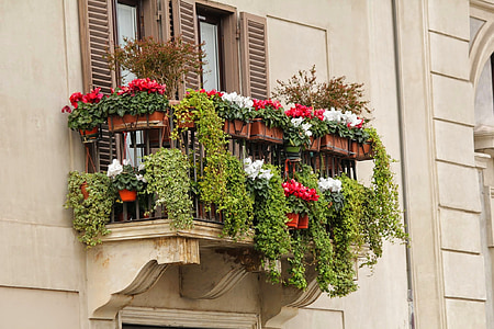 red and white flowers on the balcony