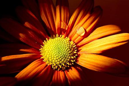 closeup photo of a orange petaled flower