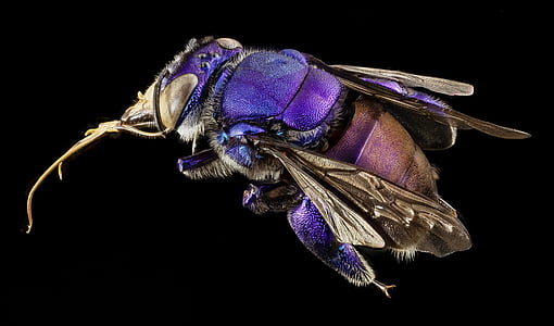 purple and brown fly