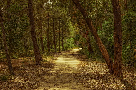 empty pathway surrounded by trees