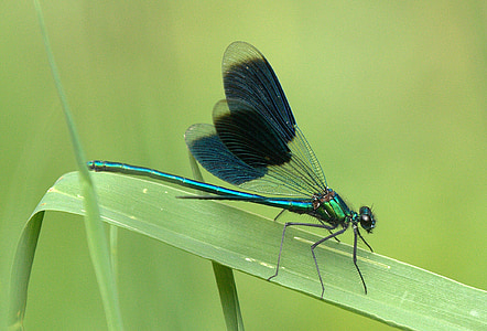 close-up photography of dragonfly perched on green leaf