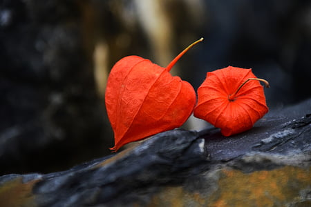 two red leaves