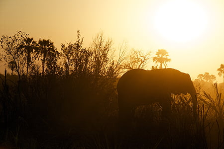 silhouette of elephant during dawn