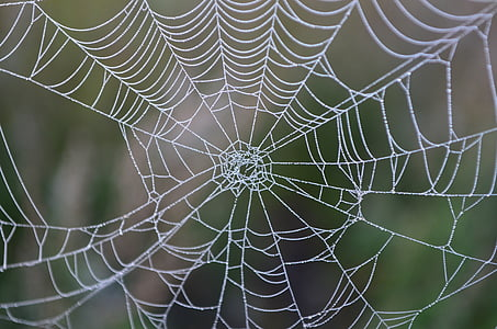 shallow focus photography of cobweb