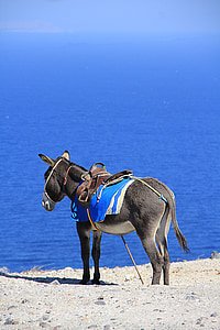 gray donkey standing at the beach