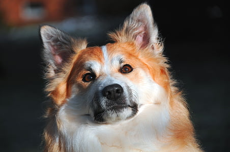 brown and white dog closeup photography