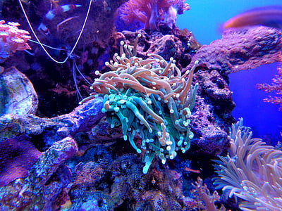 blue and pink coral underwater photography