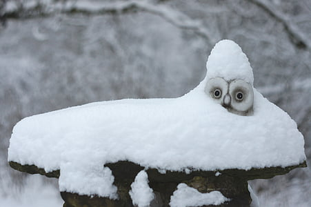 gray owl covered with snow during daytime
