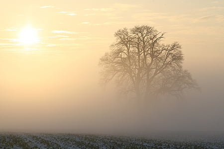 single leaf tree surrounded by mist under clear sky