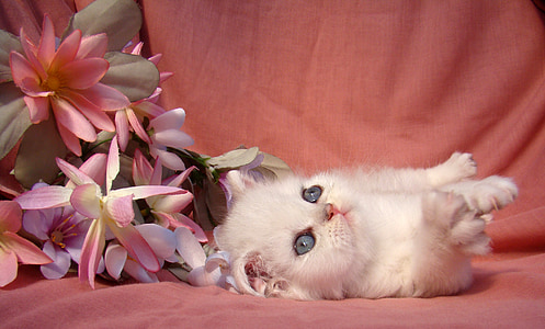 white kitten near white-and-pink flowers on pink textile