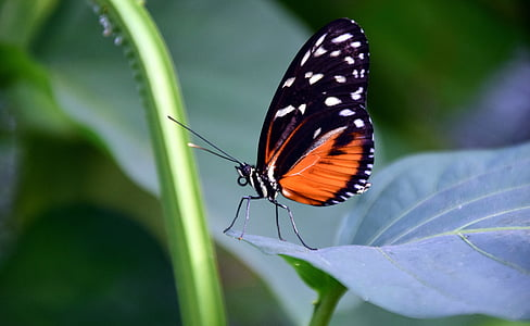 shallow focus photography of orange and black butterfly on green leaf