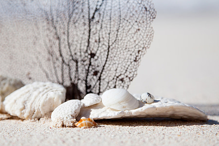 white seashell on gray sand