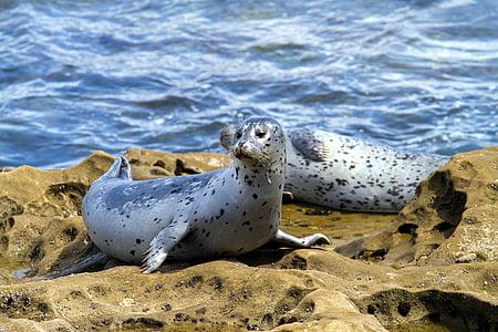 gray sea animal on beach