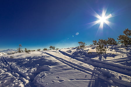 snowfield with trees during daytime