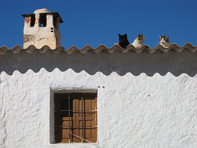 several cats on roof