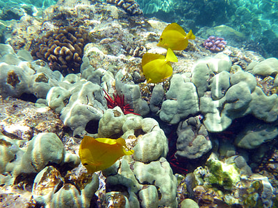 yellow fish on gray coral reef
