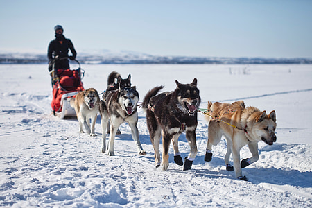five brown and black dogs on snow during daytime