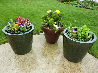 closeup photo of green leafed plants on pots