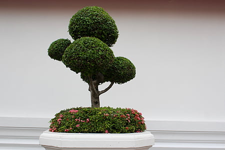 bonsai plant against white wall