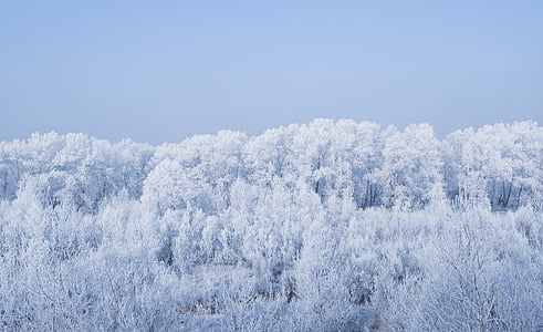 white snow covered trees