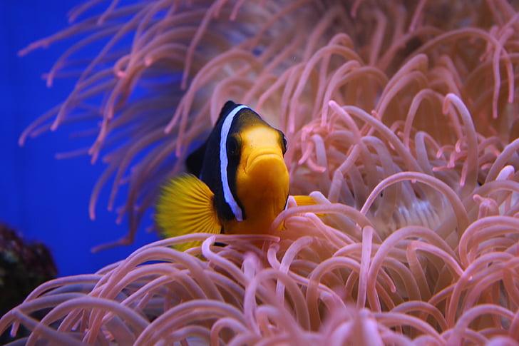 black and yellow fish