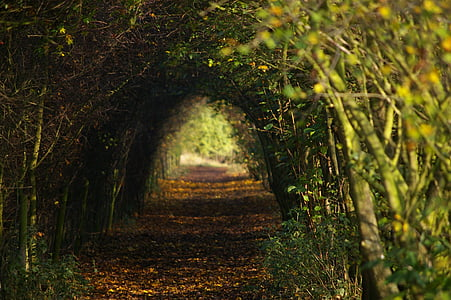 photo of plant tunnel during daytime
