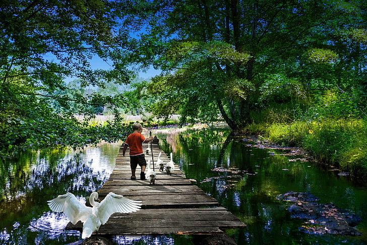 boy on wooden sear dock surrounded by garden and geese