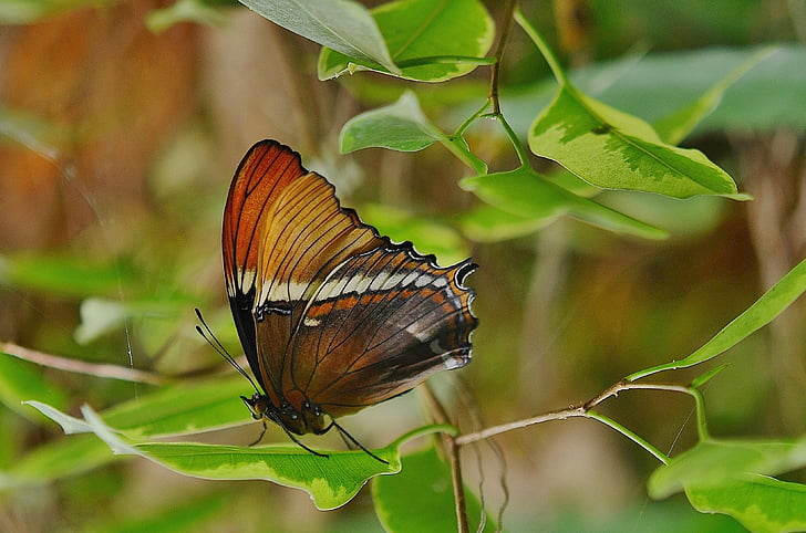 selective focus photography of butterfly perched on green leaf