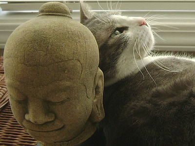grey tabby cat leaning towards head statue