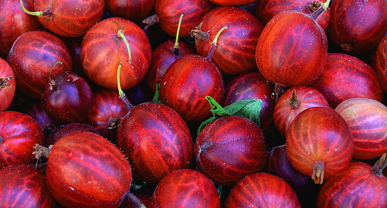 photo of red watermelons