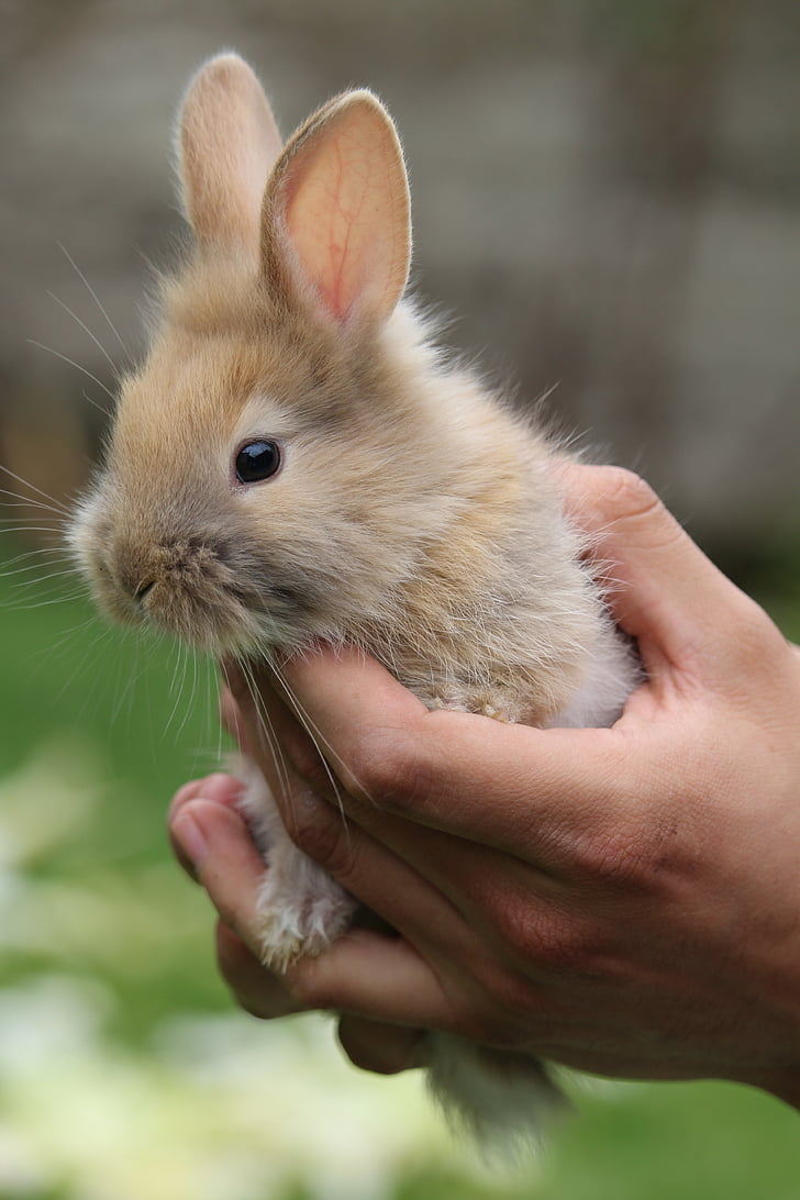 selective focus photography of person holding brown rabbit