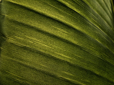 closeup of green textile